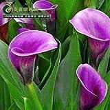 Cala estaciones de primavera y de invierno de semillas de flores de lis conjunto una plantación en macetas semillas de plantas de interior hierba vivo-10 semillas