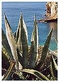TROPICA - Agave gigante (Agave americana) - 10 Semi- Mediterraneo