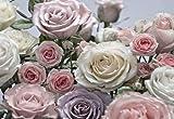 Komar Fototapete, 8-736, Floraison, creme- und rosafarbene Rosen, 368x254cm