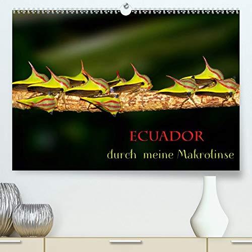 Ecuador durch meine Makrolinse (Premium-Kalender 2020 DIN A2 quer): Makroaufnahmen aus Ecuador (Monatskalender, 14 Seiten ) (CALVENDO Tiere)