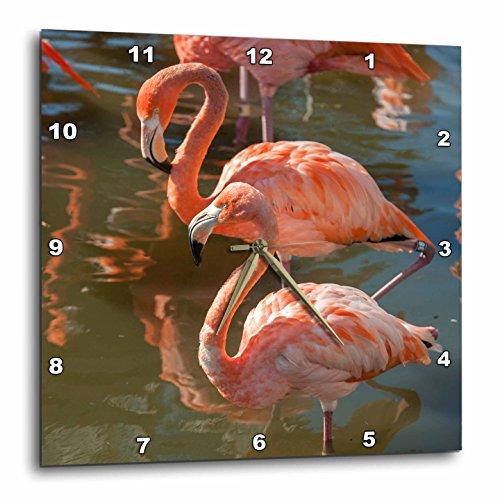 3dRose DPP 207618_ 3USA, Florida, Orlando. Pink Flamingos bei gatorland. Wanduhr, 15von 38,1cm