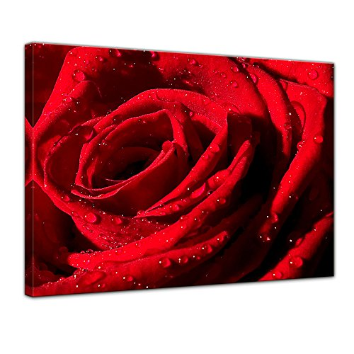 Kunstdruck - Rote Rose mit Wassertropfen - Bild auf Leinwand 70 x 50 cm - Leinwandbilder - Bilder als Leinwanddruck - Städte & Kulturen - Pflanzen & Blumen - Natur - rote Blüte mit Wasserperlen