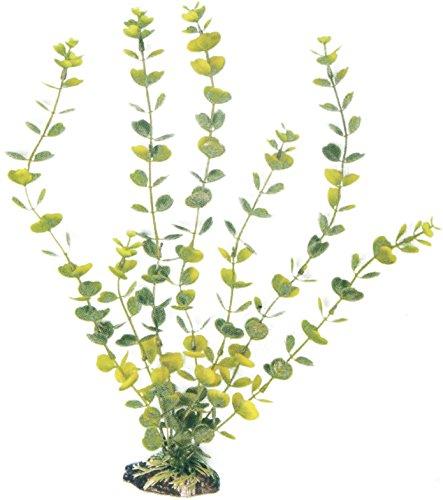 wave-hydrocotyle-plante-classique-pour-aquariophilie-taille-l