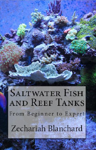 saltwater-fish-and-reef-tanks-from-beginner-to-expert