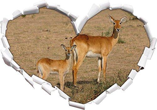 femminile gazzella indiana a forma di cuore giovane in Formato