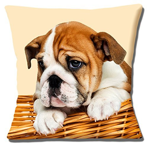 Usato, CARINO Bulldog inglese cucciolo di cane Copricuscino usato  Spedito ovunque in Italia