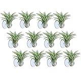 Aieve Pflanzen-Halter für Luftpflanzen, 12 Stück,...