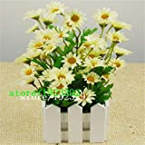 Pinkdose 100 Argyranthemum Frutescens Samen Marguerite Gänseblümchen, so hübsch, lange Blütezeit: Weiß