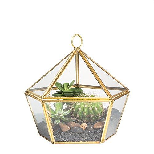 Venus Terrarium (Moderne Artistic Messing Kupfer Glas klar jewel-boxed Pentagon Form Geometrische Box für Moos Farn Air Pflanzgefäß Terrarium Planter Sukkulente Decor Behälter mit Swing Deckel gold)