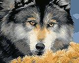 Wowdecor DIY Malen nach Zahlen Kits Geschenk für Erwachsene Kinder, Malen nach Zahlen Home Haus Dekor - Gelbe Augen Wolf 40 x 50 cm Rahmen