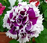 20 Colors Petunia seeds, Charming Petuni...