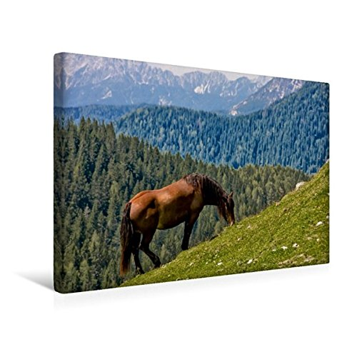 Premium Textil-Leinwand 45 cm x 30 cm quer, Ein Motiv aus dem Kalender Kärntens Natur   Wandbild, Bild auf Keilrahmen, Fertigbild auf echter Leinwand, Leinwanddruck (CALVENDO Natur)