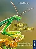 Insekten im Terrarium: Gottesanbeterinnen, Stabheuschrecken & Co.