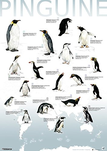 Plakat Pinguine