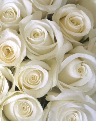White Roses: In The Garden Journal/Notebook/Diary With Wraparound Cover Image: Volume 11