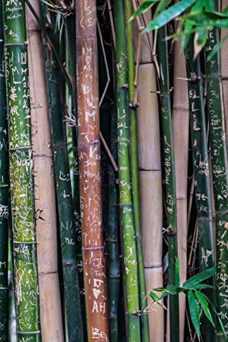 Carnet de Notes: Petit journal personnel de 121 pages blanches avec couverture « Bambous - Graffitis » par Virginie Polissou
