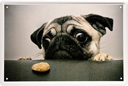 Hungriger Mops Dog Hund Funny Witzig 20 x 30 cm Deko Blechschild 1481 Bar Mop