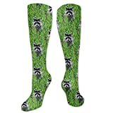 Gped Kniestrümpfe,Socken Raccoons - Painting Grass Compression Socks,Knee High Socks,Funny Socks for Women Men - Best Medical,Sports,Running, Nurses,Maternity,Pregnancy,Travel & Flight Socks