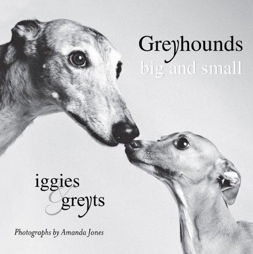 greyhounds-big-and-small