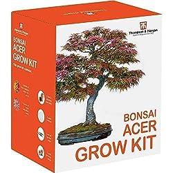 Thompson & Morgan Grow Kits Cadeau Boîtes - Kit de culture de semences complet; Tout ce dont vous avez besoin pour démarrer la croissance de vos glorieux acers; Ciseaux de jardin, 5 pots de tourbe de croissance, 5 marqueurs de plantes et 5 boucho...