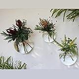 Set von 3 Blown Glas Wand Vase Blase Terrarien Indoor Pflanzer Wall Decorgemischt 3 Stück (eins pro Grö