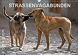 STRASSENVAGABUNDEN (Wandkalender 2019 DIN A3 quer): Straßenhunde in Ecuador (Monatskalender, 14 Seiten ) (CALVENDO Orte)