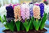2015 bulbo del jacinto, 1 PC semillas de flores de flores de bulbo jacinto de Bonsai balcón para plantar jardín de casa