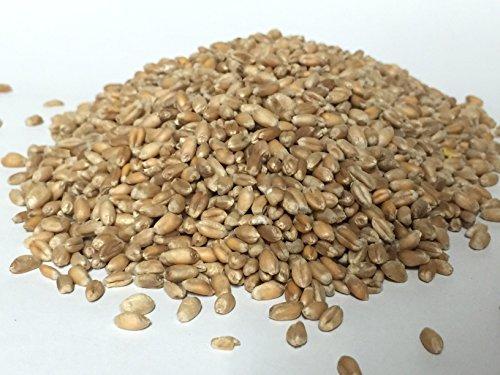 Demeter Bio Weizen ganz 1 kg keimfähig Keimsaat