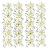 Gazechimp 20 Stück künstliche Seide Blüten Köpfe Hochzeit Blumendekoration Zimmer Deko - orchidee weiß