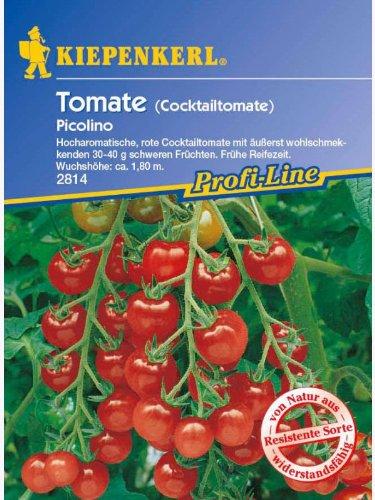 Tomaten Cocktailtomaten Picolino resistent