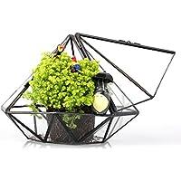 Vetro, motivo terrari Tavolo per piante succulente, motivo: felce, colore: verde muschio, motivo terrari