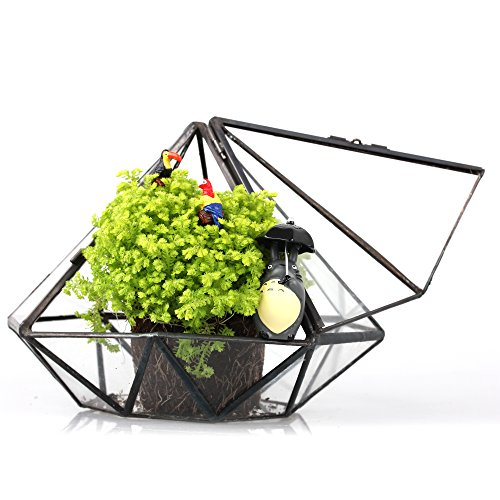 terrarium achat vente de terrarium pas cher. Black Bedroom Furniture Sets. Home Design Ideas