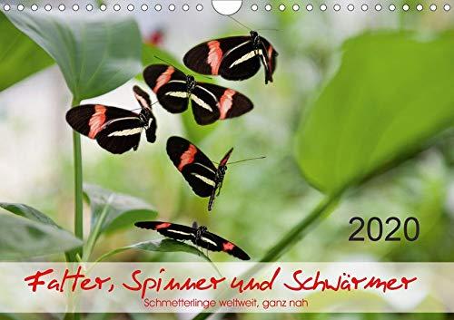 Falter, Spinner und Schwärmer (Wandkalender 2020 DIN A4 quer): Zwölf farbenprächtige, grazile Schmetterlinge aus Afrika, Asien und Südamerika, ... (Monatskalender, 14 Seiten ) (CALVENDO Natur)