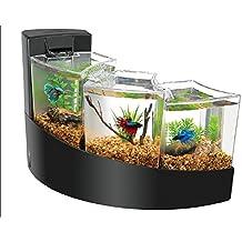 Suchergebnis auf f r kampffisch aquarium for Kampffisch aquarium