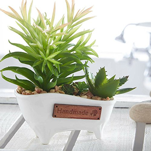 bathroom plants. Bathroom Plants  Amazon co uk Plant 8 Shower That Want To Live In Your