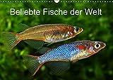Beliebte Fische der Welt (Wandkalender 2019 DIN A3 quer): Farbenprächtige Süßwasserfische (Monatskalender, 14 Seiten ) (CALVENDO Tiere)