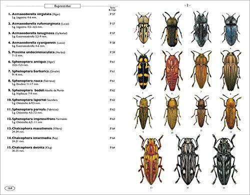 Phytophagous Beetles of Europe - Volume 1