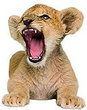 1art1 60015 Raubkatzen - Löwen-Baby, Vorsicht Vor Dem Bisschen Löwe Wand-Tattoo Aufkleber Poster-Sticker 40 x 33 cm