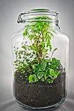 Flaschengarten Typ 4 DIY-Set/Terrarium/Biotop/Ökosystem: stilvolles Wohnaccessoire mit echten Pflanzen, ideal als Geschenk