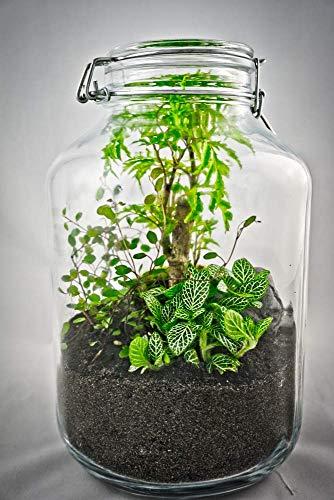 Flaschengarten Typ 4 DIY-Set/Terrarium/Biotop/Ökosystem: stilvolles Wohnaccessoire mit echten Pflanzen, ideal als Geschenk - Stilvolle Set
