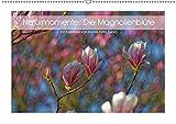 Naturmomente: Die Magnolienblüte (Wandkalender 2019 DIN A2 quer): Die Magnolie - unser schönster Frühlungsbote (Monatskalender, 14 Seiten ) (CALVENDO Natur)
