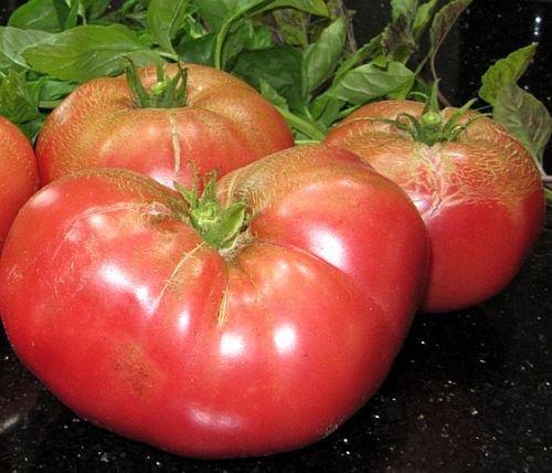 Tomate Pantano Romanesco - tomate - 50 graines