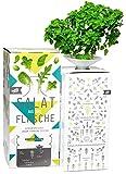 Bottlecrop - Salat aus der Flasche | Kleinblättriges Basilikum | in Flasche | Einzugsgeschenk | Anzuchtsystem | Urban Farming | Geschenkidee | Hydrokultur | Pflanzen ohne Erde| Kräuter Fentsterbank | Kräutergarten Fenster| vertikaler Garten | nachhaltig |