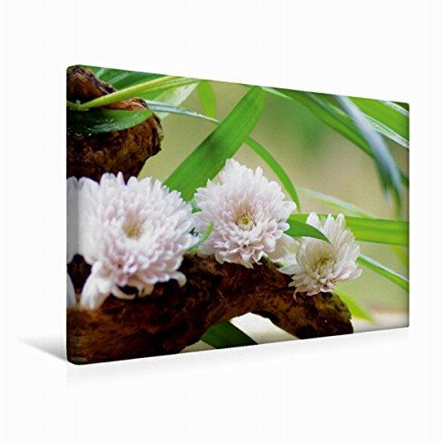 Calvendo Premium Textil-Leinwand 45 cm x 30 cm quer zarten Blüten | Wandbild, Bild auf Keilrahmen, Fertigbild auf echter Leinwand, Leinwanddruck Gesundheit Gesundheit