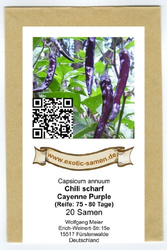 Chili scharf - Cayenne purple - 20 Samen