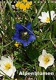 Alpenblumen (Tischkalender 2018 DIN A5 hoch): Dieser Kalender zeigt die bunte Vielfalt der Alpenflora. (Monatskalender, 14 Seiten ) (CALVENDO Natur) [Kalender] [Apr 01, 2017] Haas, Willi