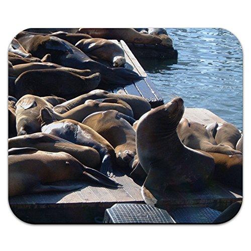 Graphics and More San Francisco Seal Löwen–Pier 39Fisherman 's Wharf Mauspad Mauspad