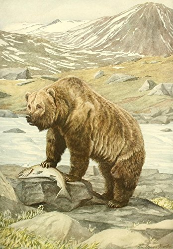 L.A. Fuertes - Wild Animals of N. America 1918 Brown Bear Kunstdruck (45,72 x 60,96 cm)