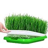 Vassoio per sprouter per semi da 5 confezioni, griglia a 2 fori di piccole dimensioni, vassoio per asilo nido gratuito BPA per piantine Coltivatore di erba per grano Fioriera idroponica in giardino