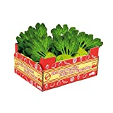 Best Kohlrabis - Legler Pretend Play Box of Kohlrabi Review
